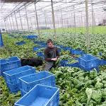 Groente- en tuinbouwbedrijf